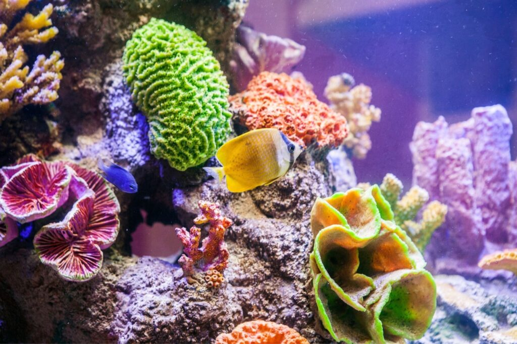 Reef Keeping World, Fish and Corals