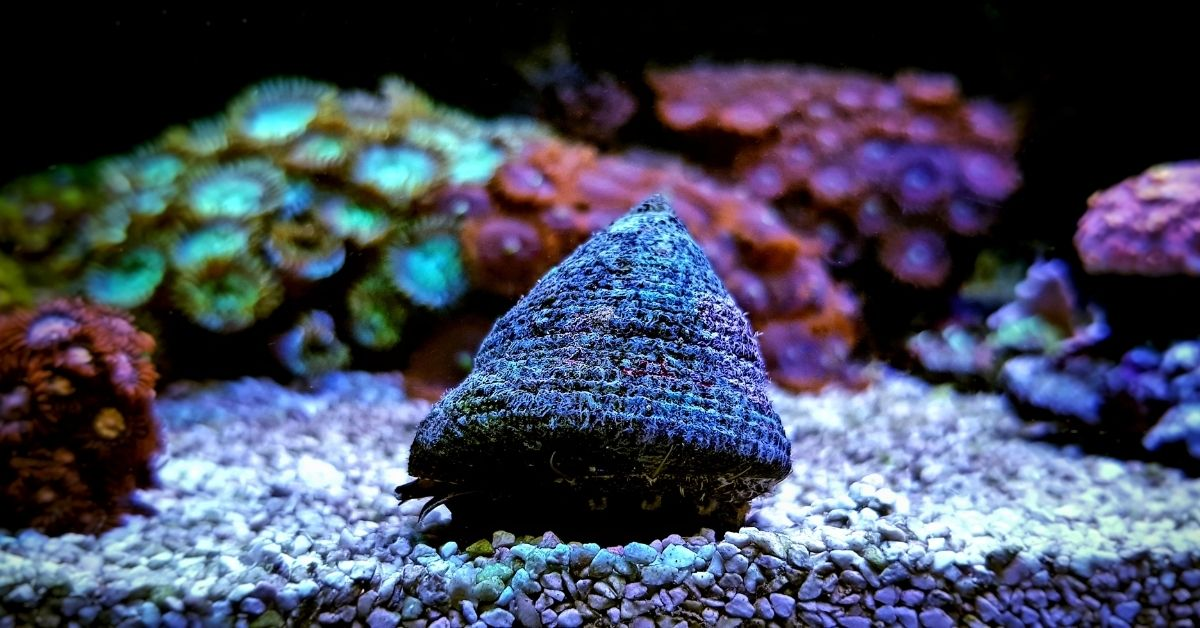 What Causes Snails to Die in a Saltwater Tank?