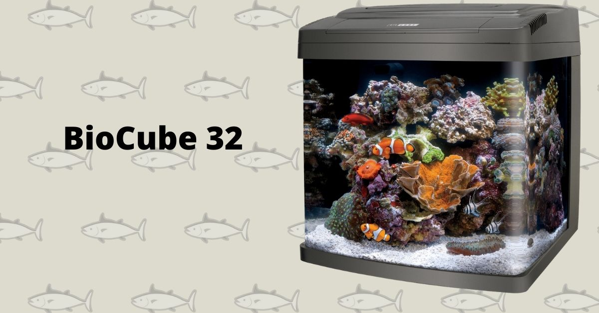 BioCube 32 Stocking List - What Saltwater Fish and Corals You Can Add?