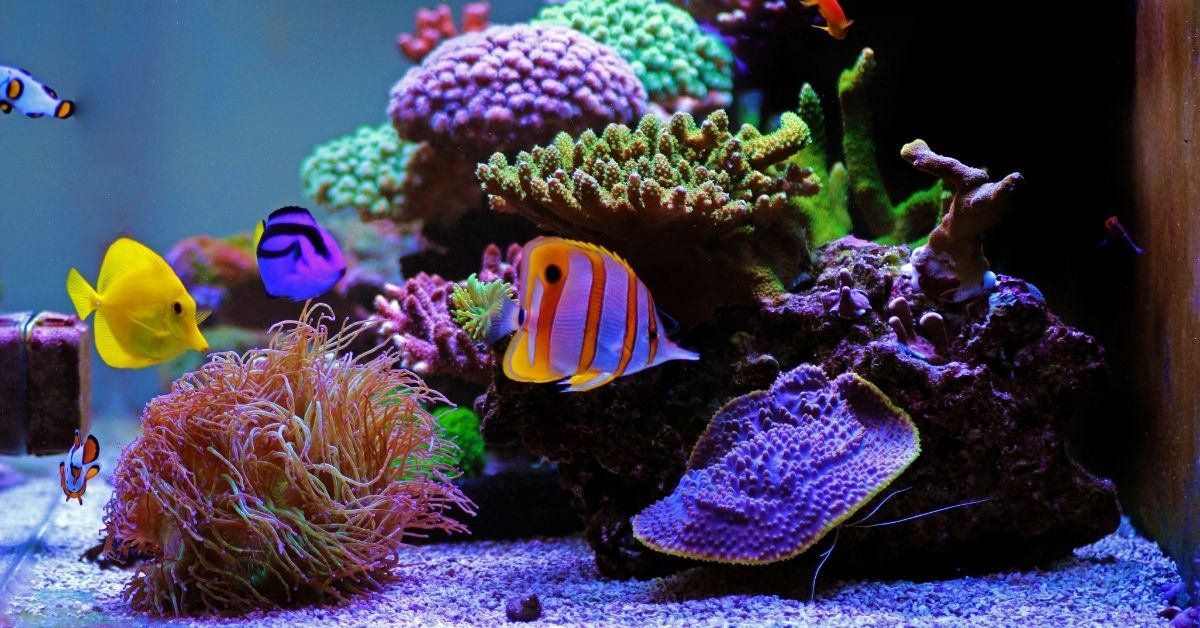 Live Sand vs. Dry Sand in Reef Tank - What Are the Differences?